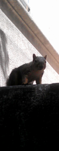 Squirrel who also visited our Welcome Day Lunch!